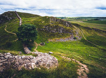 Sycamore Gap. Iconic Sycamore Gap on Hadrian's Wall in Northumberland.  Used as a location in the film 'Robin Hood: Prince of Thieves&#x27 Royalty Free Stock Images