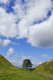 Sycamore gap, Robin Hood tree Royalty Free Stock Photo