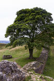 Sycamore Gap on the Roman Wall. Northumberland, England. Stock Images