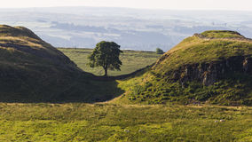 Sycamore Gap on the Roman Wall. Northumberland, England. Royalty Free Stock Photo