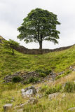Sycamore Gap on the Roman Wall. Northumberland, England. Royalty Free Stock Image