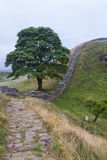 Sycamore Gap on the Roman Wall. Northumberland, England. Stock Photography