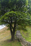 Sycamore Gap on the Roman Wall. Northumberland, England. Royalty Free Stock Photography