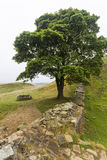 Sycamore Gap on the Roman Wall. Northumberland, England. Royalty Free Stock Photos