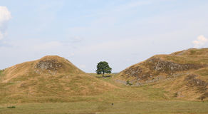 Sycamore Gap. Stock Photo