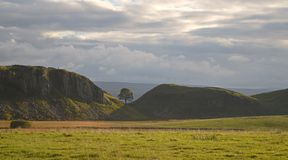 Sycamore Gap Stock Images