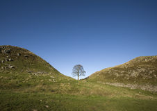 Sycamore Gap. The Sycamore tree at Sycamore Gap along the Hadrians Wall stock photography