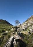 Sycamore Gap Royalty Free Stock Photography