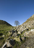 Sycamore Gap Stock Image