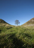 Sycamore Gap Royalty Free Stock Images