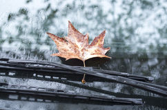 Sycamore leaf on wipers of a car in autumn day Stock Image