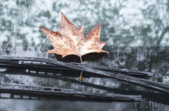 Sycamore leaf on wipers of a car in autumn day Royalty Free Stock Photos