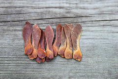 Sycamore seeds. Dried sycamore seeds in the garden royalty free stock photography