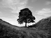 Sycamore Gap stock photography