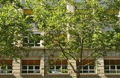 Sycamore trees and facade, Stuttgart Stock Photo