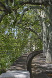 Sycamores. Spring  green avenue of sycamores growing along the waterfront Royalty Free Stock Photos