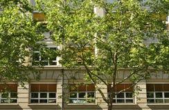 Sycamoretrees och facade, Stuttgart Arkivfoto