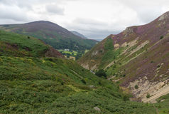 Sychnant Pass, United Kingdom mountain valley. Fern and Heather. Royalty Free Stock Photos