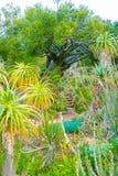 Sydafrika trädgård Royaltyfri Bild