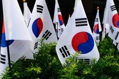 Sydkoreanflaggor Royaltyfri Bild