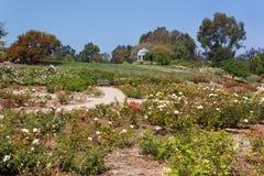 Sydkustbotanisk trädgård Royaltyfria Bilder