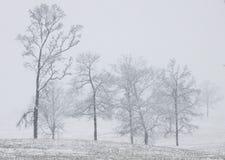 sydlig snow arkivfoto