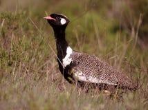 Sydliga afrikanska fåglar Arkivbilder