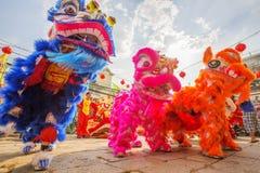 Sydliga Lion Dance på ögonöppningscermoni, pagod för dam Thien Hau, Vietnam Royaltyfri Bild