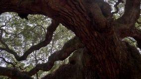 Sydliga Live Oak/Johns ö/charleston/USA lager videofilmer