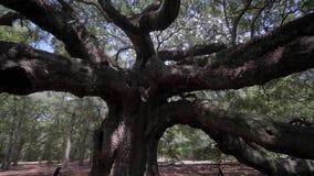 Sydliga Live Oak/Johns ö/charleston/USA stock video