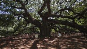 Sydliga Live Oak/Johns ö/charleston/USA arkivfilmer