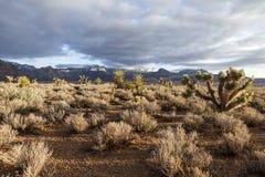 Sydliga Nevada Mojave Desert Morning Royaltyfri Fotografi