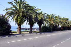 Sydliga palmträd Royaltyfri Bild