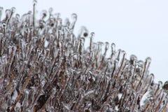Sydligt djupfrysa Fotografering för Bildbyråer