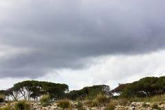 Sydligt sörja träd under en stormig purpurfärgad himmel med moln arkivbilder