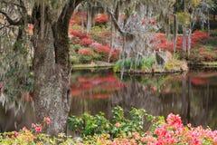 Sydligt trädgårds- landskap Arkivbilder
