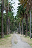 SYDNEY, AUSTRALIË - NOVEMBER 24, 2014: Agentlooppas in Sydney Centennial Park, Australië Stock Foto