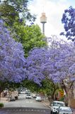Alley of blooming Jacaranda trees with Sydney Westfield Tower on stock photos