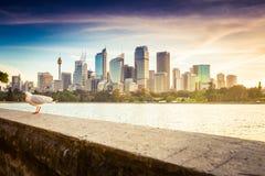 SYDNEY AUSTRALIEN - SEPTEMBER 5, 2013: Operahussikt från stol för fru Macquaries på skymningtid i afton på September 5, 201 Royaltyfri Fotografi