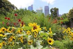 Sydney Botanical Gardens et l'horizon de Sydney photos stock