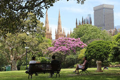 Sydney Botanical Gardens and the Sydney skyline Stock Photo