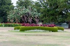 Sydney Centennial Park med att blomma blommor Arkivbild