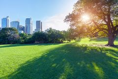 Sydney City Botanical Gardens image stock