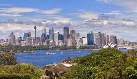 Sydney City Day Panorama from Zoo Royalty Free Stock Photography
