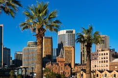 Sydney cityscape with palm trees on the foreground Royalty Free Stock Images