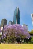 Sydney de florecimiento Fotos de archivo