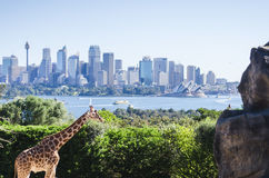 Sydney with a giraffe. Sydney skyline with a giraffe Royalty Free Stock Photo