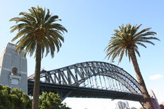 Sydney-Hafen-Brücke einschließlich zwei Palmen Stockbild