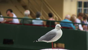 Sydney Harbor ferry with gull on post stock video footage