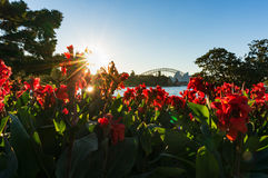 Sydney Harbour Bridge on sunset. Surrounded with red canna flowers and beaming sun on the background Royalty Free Stock Photography
